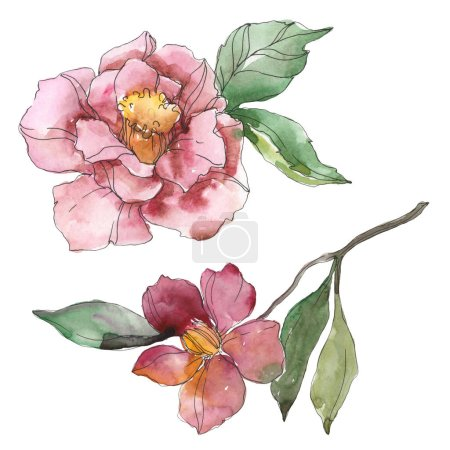 Photo for Red and purple camellia isolated on white. Watercolor background illustration element. - Royalty Free Image