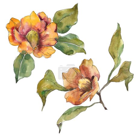 Photo for Isolated orange camellia flowers with green leaves. Watercolor illustration set. - Royalty Free Image