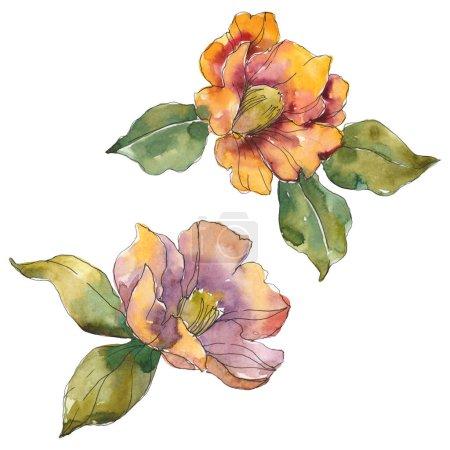 Photo pour Isolated orange camellia flowers with green leaves. Watercolor illustration set. - image libre de droit