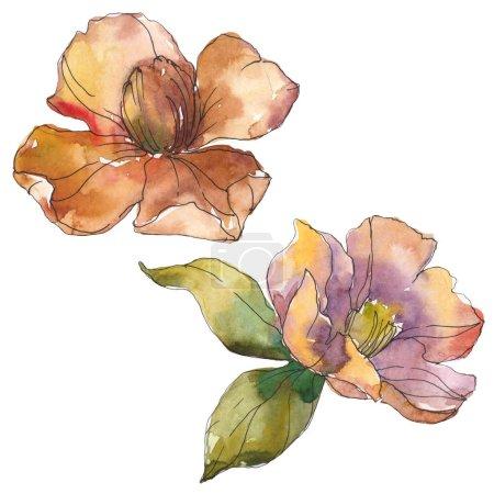 Foto de Isolated  orange camellia flowers with green leaves. Watercolor illustration set. - Imagen libre de derechos