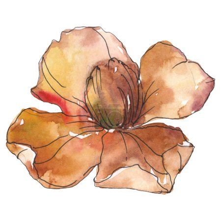 Photo pour Fleur de camélia orange isolés. Illustration aquarelle. - image libre de droit