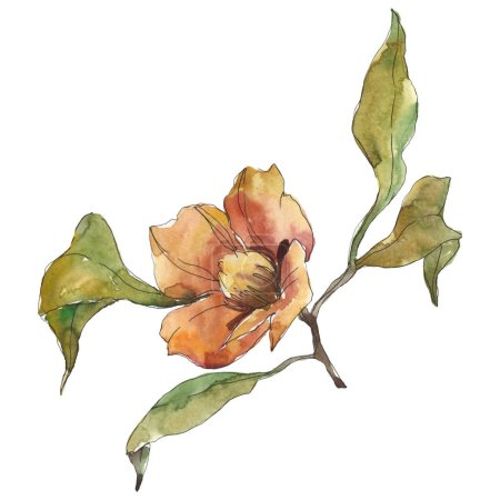 Photo for Isolated orange camellia flower with green leaves. Watercolor illustration. - Royalty Free Image