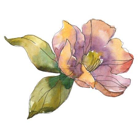 Photo pour Isolated orange camellia flower with green leaves. Watercolor illustration. - image libre de droit