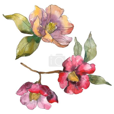Photo pour Isolated orange and red camellia flowers with green leaves. Watercolor illustration set. - image libre de droit