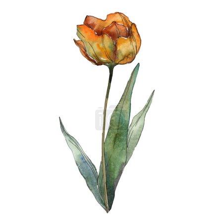 Photo pour Orange pavot isolé avec la feuille. Élément d'illustration aquarelle. - image libre de droit