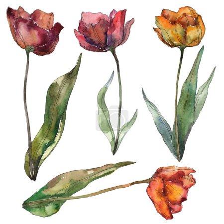 Photo pour Coquelicots isolés de Bourgogne et d'orange aux feuilles. Éléments d'illustration aquarelle . - image libre de droit