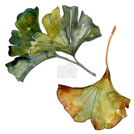 Photo for Yellow and green ginkgo biloba isolated leaves. Watercolor background illustration set. - Royalty Free Image