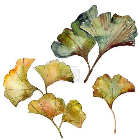 Photo pour Feuilles isolées de ginkgo biloba jaune et vert. Ensemble d'illustration de fond aquarelle . - image libre de droit
