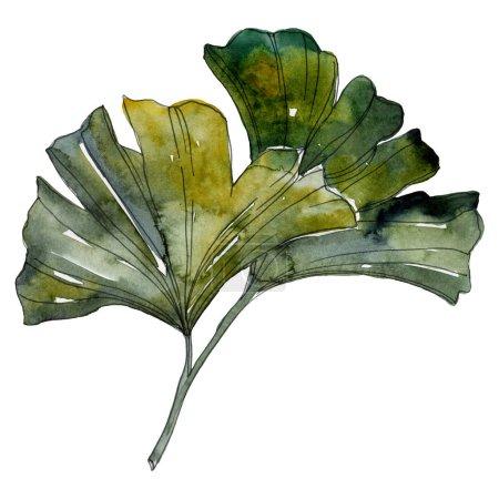 Photo pour Feuilles isolées de ginkgo biloba vert. Ensemble d'illustration de fond aquarelle . - image libre de droit