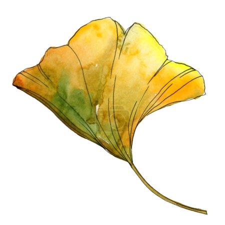 Photo pour Feuille isolée de ginkgo biloba jaune et vert. Illustration de fond aquarelle . - image libre de droit
