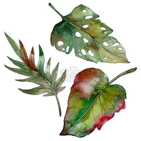Photo pour Feuilles de palmiers tropicaux exotiques de vert isolé. Illustration aquarelle set. - image libre de droit