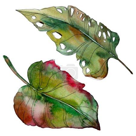 Photo pour Les feuilles exotiques palmiers verts tropicaux isolés. Illustration de fond aquarelle. - image libre de droit