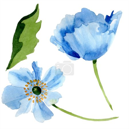 Photo for Blue poppies with leaf watercolor illustration with isolated on white - Royalty Free Image