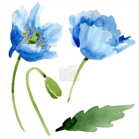 Foto de Amapolas azules con hoja ilustración acuarela con aislados en blanco - Imagen libre de derechos
