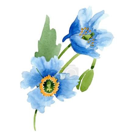 Photo for Blue poppies, leaf and bud isolated on white. Watercolor illustration set. - Royalty Free Image