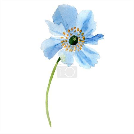 Foto de Amapola azul aislada en blanco. Elemento de ilustración acuarela. - Imagen libre de derechos