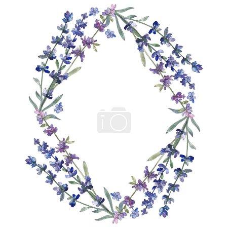 Foto de Lavanda púrpura. Flor botánica floral. Wildflower de hoja de primavera salvaje aislado. Conjunto de ilustración de fondo de acuarela. Acuarela dibujo moda aquarelle aislado. Plaza de ornamento de frontera marco - Imagen libre de derechos