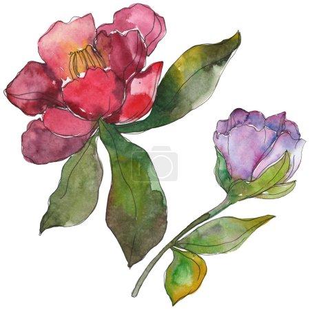 Photo pour Fleurs de camélia rouge et violet isolés sur blanc. Éléments d'illustration aquarelle arrière-plan. - image libre de droit