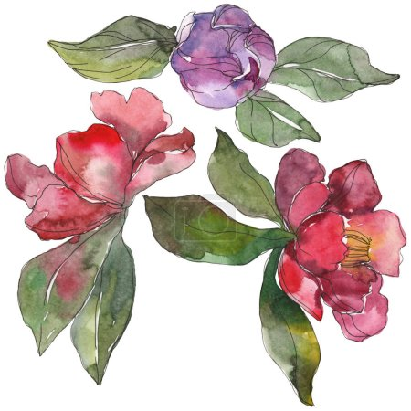Photo for Red and purple camellia flowers isolated on white. Watercolor background illustration elements. - Royalty Free Image