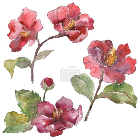 Red peonies isolated on white watercolor background illustration set.