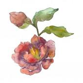 "Постер, картина, фотообои ""Red peonies isolated on white watercolor background illustration set. """