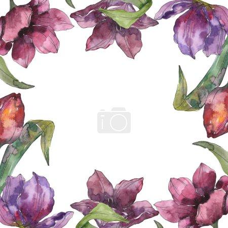 Foto de Flores botánicas florales tulipán púrpura. Wildflower de hoja de primavera salvaje aislado. Conjunto de ilustración de fondo de acuarela. Acuarela dibujo moda aquarelle aislado. Plaza de ornamento de frontera marco - Imagen libre de derechos