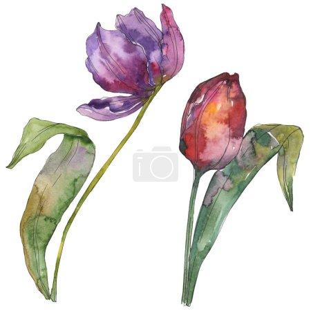 Foto de Flores botánicas florales tulipán púrpura. Wildflower de hoja de primavera salvaje aislado. Conjunto de ilustración de fondo de acuarela. Aquarelle de moda dibujo de acuarela. Elemento de ilustración aislada tulip. - Imagen libre de derechos