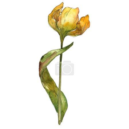 Foto de Elemento de ilustración aislada de tulipán amarillo. Ilustración de fondo acuarela. - Imagen libre de derechos