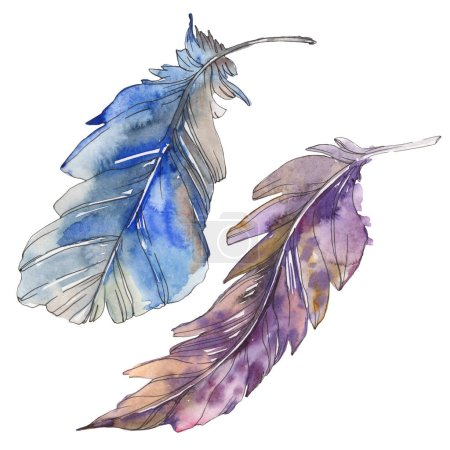 Photo pour Plume d'oiseau d'aile isolé. Aquarelle de fond illustration ensemble. Aquarelle de mode dessin aquarelle isolé. Élément d'illustration isolé plumes. - image libre de droit