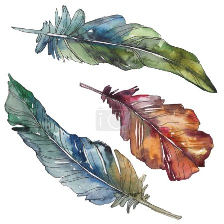 Photo pour Plume d'oiseau de l'aile isolée. Ensemble d'illustration de fond aquarelle. Aquarelle dessin mode aquarelle isolé. Élément d'illustration de plumes isolées . - image libre de droit