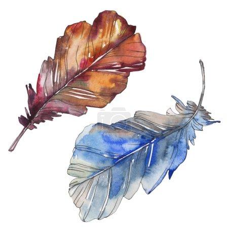 Photo pour Plume d'oiseau d'aile isolé. Aquarelle de fond illustration ensemble. Aquarelle de mode dessin aquarelle isolé. Élément d'illustration isolé plumes. - image libre de droit