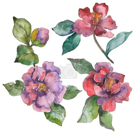 Red and purple camellia flowers isolated on white. Watercolor background illustration elements.