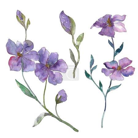Flor botánica floral de lino azul y púrpura. Flor silvestre de hoja de primavera aislada. Conjunto de ilustración de fondo acuarela. Acuarela dibujo moda aquarelle. Elemento aislado de ilustración de lino .