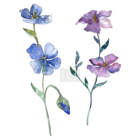 Photo for Blue and purple flax floral botanical flower. Wild spring leaf wildflower isolated. Watercolor background illustration set. Watercolour drawing fashion aquarelle. Isolated flax illustration element. - Royalty Free Image