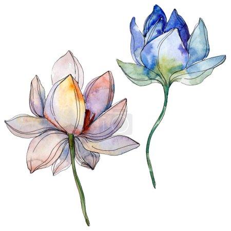 Photo pour Lotus bleu et violet. Ensemble d'illustration de fond aquarelle. Lotus isolés éléments d'illustration . - image libre de droit