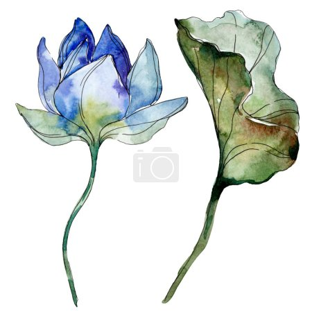 Photo for Blue and purple lotus flower with green leaf. Watercolor isolated illustration elements. - Royalty Free Image