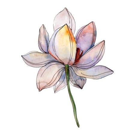 Photo pour Fleur de lotus bleue et violette. Aquarelle illustration de fond élément isolé . - image libre de droit