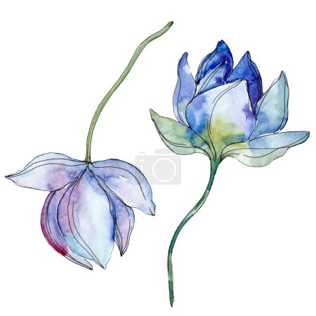 Photo for Blue and purple lotuses. Watercolor background illustration set. Isolated lotuses illustration elements. - Royalty Free Image