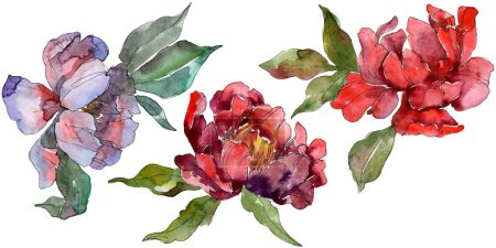 Photo pour Pivoines rouges et violets. Aquarelle de fond ensemble. Éléments d'illustration isolé pivoines. - image libre de droit