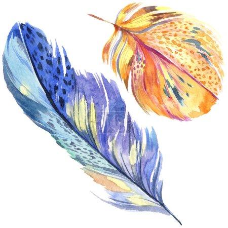 Photo pour Plume d'oiseau coloré d'aile isolé. Plume d'aquarelle pour le fond. Illustration aquarelle ensemble. Aquarelle de mode dessin aquarelle isolé. Élément d'illustration isolé plumes. - image libre de droit