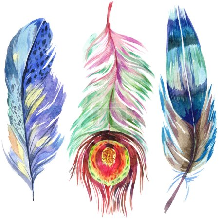 Photo for Colorful bird feather from wing isolated. Aquarelle feather for background. Watercolor illustration set. Watercolour drawing fashion aquarelle isolated. Isolated feather illustration element. - Royalty Free Image
