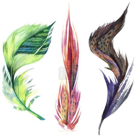 Photo pour Plume d'oiseau colorée de l'aile isolée. Plume Aquarelle pour fond. Ensemble d'illustration aquarelle. Aquarelle dessin mode aquarelle isolé. Élément isolé d'illustration de plumes . - image libre de droit