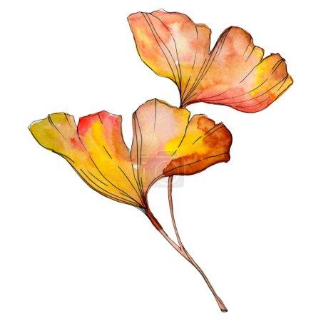 Foto de Hoja de biloba del ginkgo amarillo verde. Follaje de jardín botánico de plantas de hoja. Conjunto de ilustración de fondo de acuarela. Acuarela dibujo moda aquarelle aislado. Elemento de ilustración aislada de ginkgo. - Imagen libre de derechos
