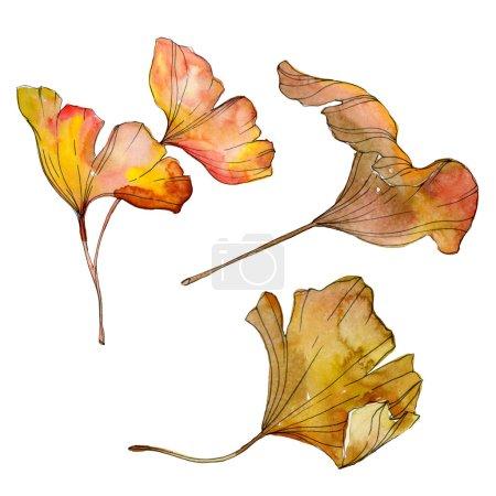 Photo for Green yellow ginkgo biloba leaf. Leaf plant botanical garden foliage. Watercolor background illustration set. Watercolour drawing fashion aquarelle isolated. Isolated ginkgo illustration element. - Royalty Free Image