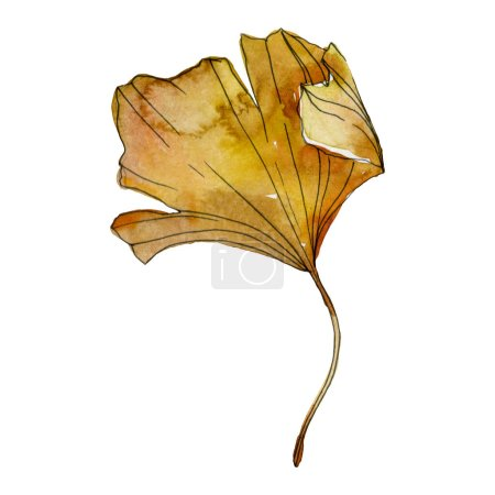 Photo for Green yellow ginkgo biloba leaf. Leaf plant botanical garden foliage. Watercolor background illustration set. Watercolour drawing fashion aquarelle isolated. Isolated ginkgo illustration element. - Royalty Free Image