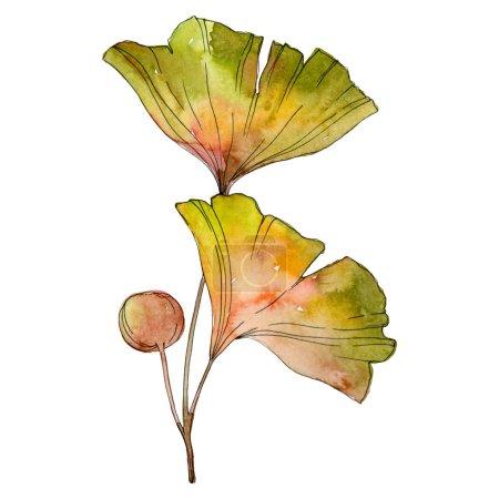 Photo pour Feuille de ginkgo jaune vert de biloba. Feuillage feuille plante jardin botanique. Aquarelle de fond illustration ensemble. Aquarelle de mode dessin aquarelle isolé. Élément d'illustration isolé ginkgo. - image libre de droit