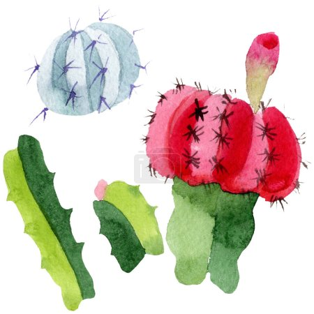 Green and red cacti isolated on white. Watercolor background illustration set.