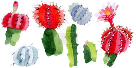 Photo for Green and red cacti isolated on white. Watercolor background illustration set. - Royalty Free Image