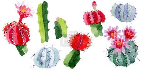 Photo pour Cactus vert et rouge isolés sur blanc. Ensemble d'illustration de fond aquarelle . - image libre de droit