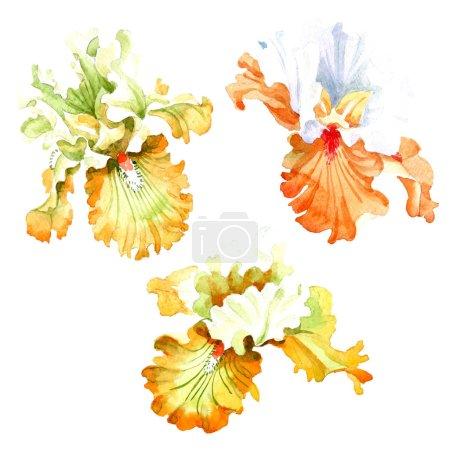 Foto de Floral flor botánico iris blanco naranja. Wildflower de hoja de primavera salvaje aislado. Conjunto de ilustración de fondo de acuarela. Aquarelle de moda dibujo de acuarela. Elemento de ilustración iris aislado. - Imagen libre de derechos